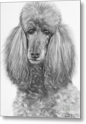 Silver Standard Poodle Drawing Metal Print