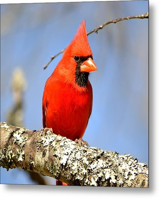 Metal Print featuring the photograph Simply Red by Deena Stoddard