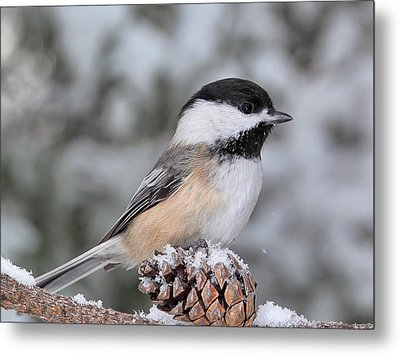 Sitting On A Snow Cone Metal Print