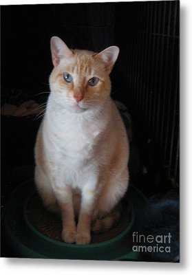 Metal Print featuring the photograph Sitting Pretty by Wendy Coulson