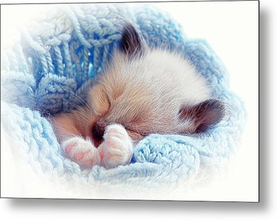 Metal Print featuring the photograph Sleeping Siamese Kitten by Tracie Kaska