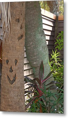 Smiley Tree Metal Print by Aimee L Maher Photography and Art Visit ALMGallerydotcom
