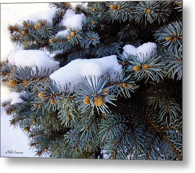 Snow Covered Spruce Metal Print by Mikki Cucuzzo