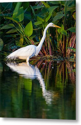 Snow Egret And Its Reflection Metal Print by Andres Leon