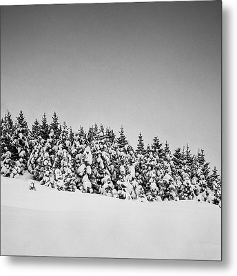 Snow On Tree Metal Print