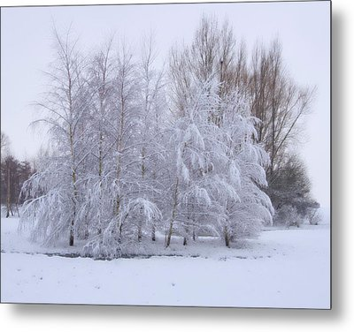 Metal Print featuring the photograph Snow Trees by Paul Gulliver