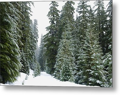Snowy Mount Hood Forest Metal Print by Charmian Vistaunet