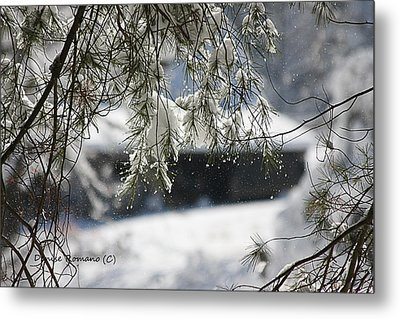 Metal Print featuring the photograph Snowy Pine by Denise Romano