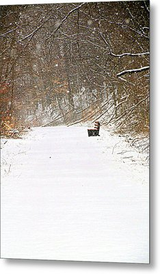 Snowy Seat Metal Print by Andrea Dale