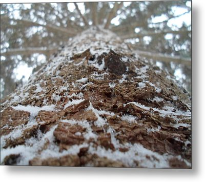 Snowy Tree Metal Print by Jenna Mengersen