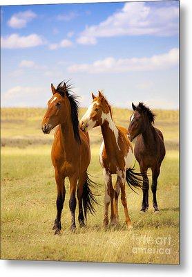 Southwest Wild Horses On Navajo Indian Reservation Metal Print