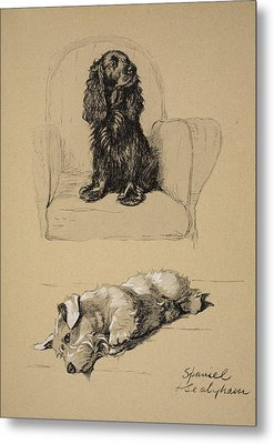 Spaniel And Sealyham, 1930 Metal Print by Cecil Charles Windsor Aldin