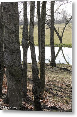 Metal Print featuring the photograph Spiral Trees by Nick Kirby