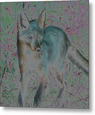Metal Print featuring the photograph Spirit Fox by Aurora Levins Morales