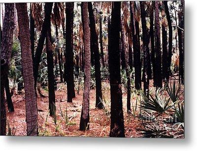 Spirit In The Trees Metal Print by Steven Valkenberg