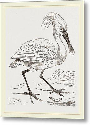 Spoonbill Metal Print by Litz Collection