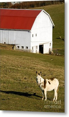 Spotted Donkey Looks Uninterested Metal Print