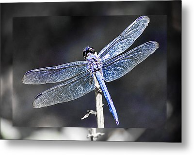 Metal Print featuring the digital art Spreading Her Wings by Linda Segerson