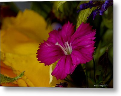 Metal Print featuring the photograph Spring Colors by Kathy Ponce