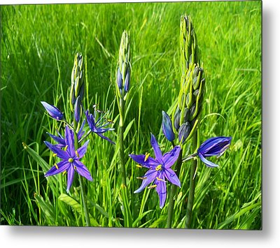 Spring Greetings Metal Print by Steve Battle