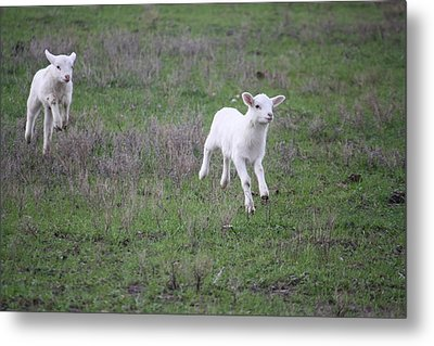 Spring Has Sprung Metal Print by Donna  Smith