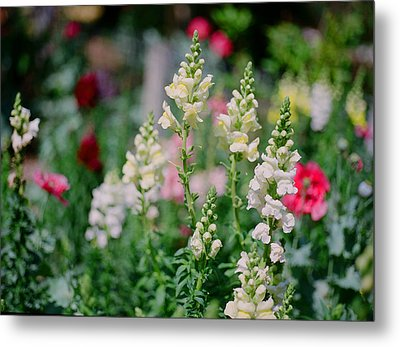 Spring On Film Metal Print