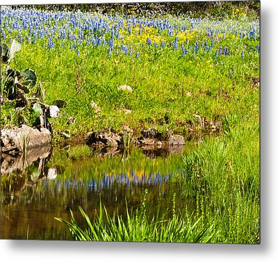Spring Reflection Metal Print by Thomas Pettengill