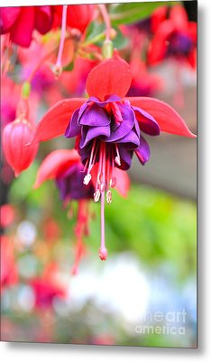 Springle Bells Metal Print