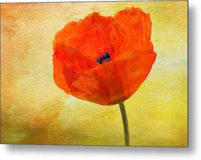 Springtime Poppy Beauty Metal Print by Denyse Duhaime
