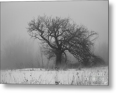 Standing Alone Metal Print by Alana Ranney