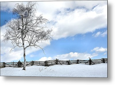 Standing Alone Metal Print by Todd Hostetter