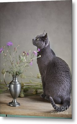 Still Life With Cat Metal Print by Nailia Schwarz