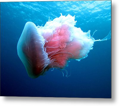 Stinging Beauty Caribbean Sea Metal Print by Laura Hiesinger