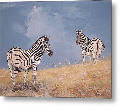 Stormy Zebra Metal Print by Robert Teeling