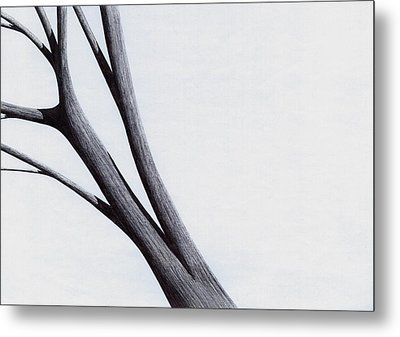 Metal Print featuring the drawing Strong Branches Between Light by Giuseppe Epifani