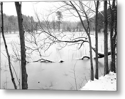 Stuck In The Middle With You Metal Print by Regina  Williams