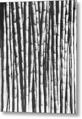 Sugar Cane, Mexico, 1929 Metal Print by Tina Modotti