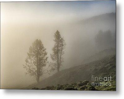 Summer Morning In Yellowstone Metal Print by Sandra Bronstein