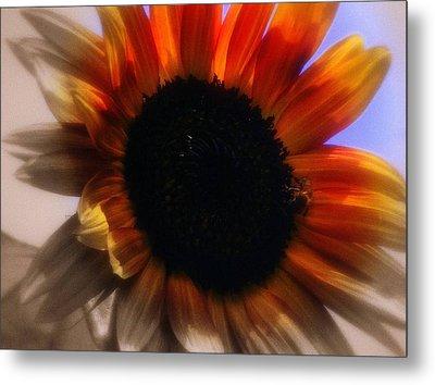 Sun Flower Metal Print by Karen Kersey