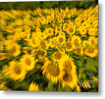 Metal Print featuring the photograph Sunflower Blur by Dale Nelson