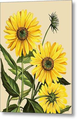Sunflower Metal Print by English School