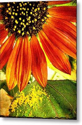 Sunflower Memories Metal Print by Kathy Bassett