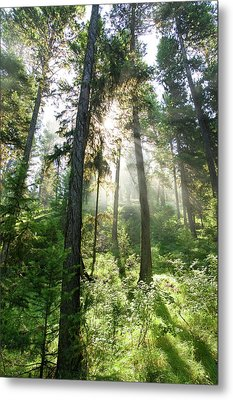 Sunlight Shining Through Forest Canopy Metal Print