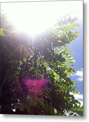 Metal Print featuring the photograph Sunlight Above The Trees by Alohi Fujimoto