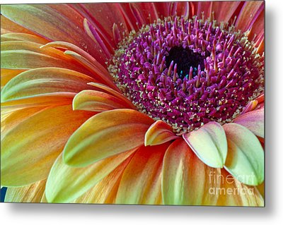 Sunny Gerber 2012 Metal Print by Art Barker
