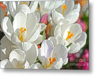 Sunny White Flowers Metal Print by Nur Roy