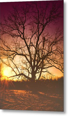 Sunrise Metal Print by Kelly Reber