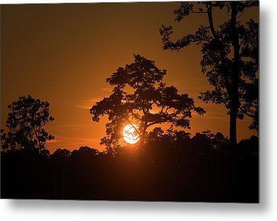 Sunrise Over Kaziranga National Park Metal Print by Steve Winter