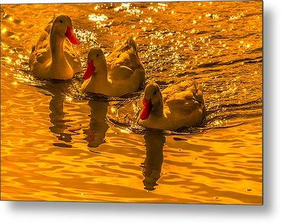 Sunset Ducks Metal Print by Brian Stevens