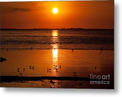 Metal Print featuring the photograph Sunset With The Birds Photo by Meg Rousher